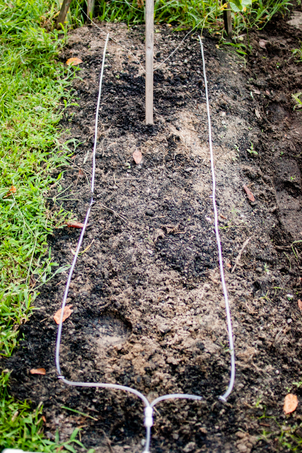 two lines for diy inexpensive irrigation system